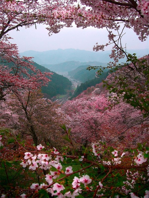 Источник http://flowery-blog.ru/