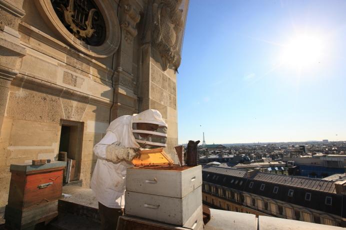 Пчеловод с пчелиными ульями на крыше Гранд Опера в Париже. Источник http://3.bp.blogspot.com/