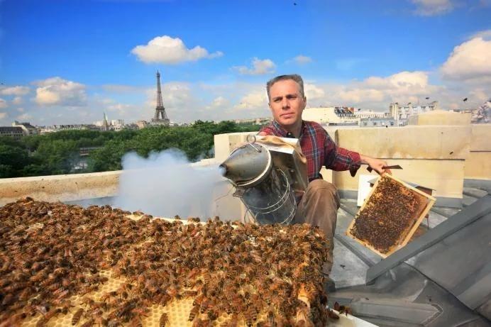 Пчелы на крыше Оперы Гарнье в Париже. Источник https://im0-tub-ru.yandex.net/