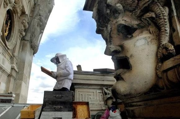 Пчеловод на крыше Гранд Опера в Париже. Источник https://im0-tub-ru.yandex.net/