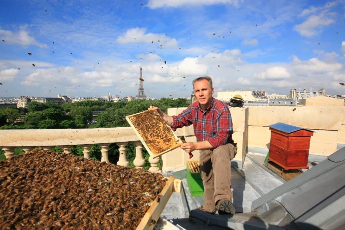 Пчелы на крыше Оперы Гарнье в Париже. Источник http://3.bp.blogspot.com/