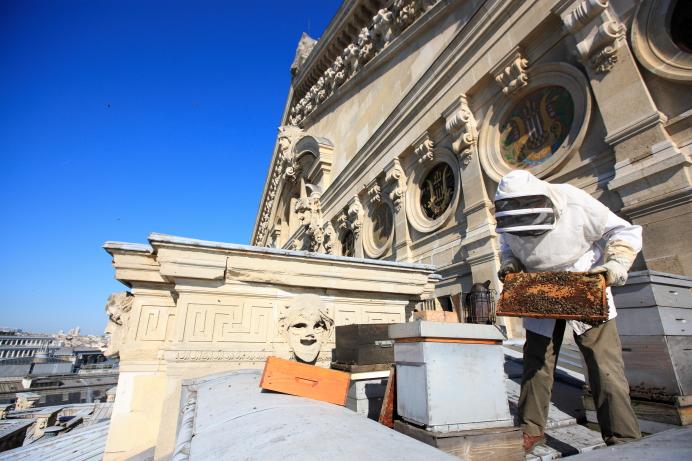 Пчеловод с пчелиными ульями на крыше Гранд Опера в Париже. Источник http://1.bp.blogspot.com/