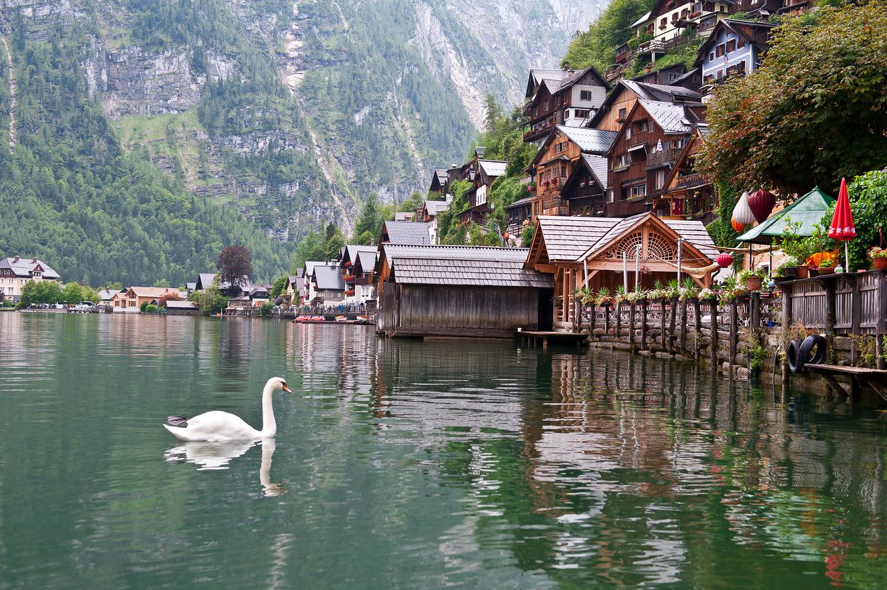 Как и на всех австрийских озерах, здесь живут лебеди. Источник http://img-fotki.yandex.ru/